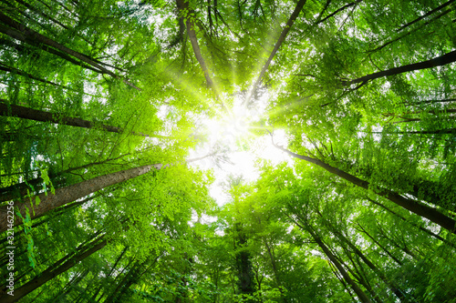 Wide-angle canopy shot in a beautiful green forest