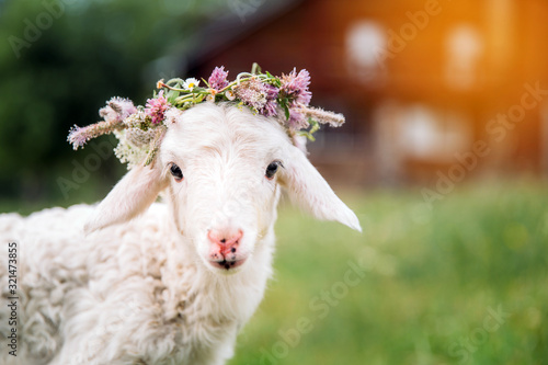 Baby lamb with flower crown Canvas Print