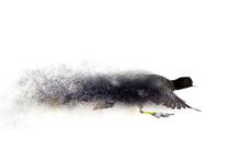 Birds. Dispersion, Splatter Ef...