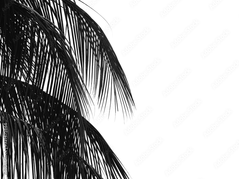 black and white coconut leaf silhouette