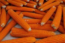 Popcorn Corn On The Cob At A Market