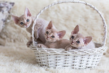 Three Kittens In A Basket Are ...