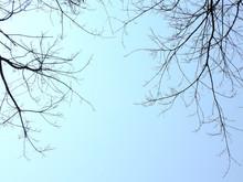 Dry Branch Tree On Blue Sky Background