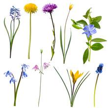 Spring Different Wild Flowers ...