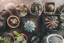 Home Garden Cactus Plant Design.