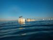 canvas print picture - schlafende Möwen im Meer