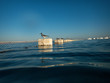 canvas print picture - Möwe im Meer