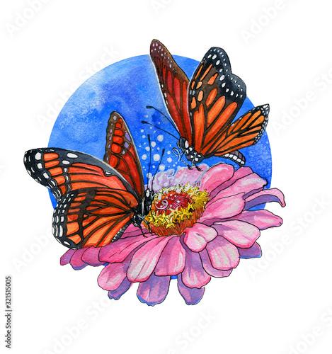 Two monarch butterflies and zinnia flower Wallpaper Mural