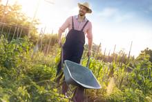 Young Male Farmer Pushing Wheelbarrow