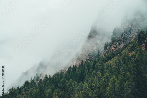 Photo Atmospheric ghostly dark forest in dense fog among big rocks