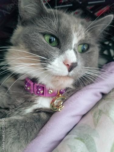 Spice the Photogenic Cat