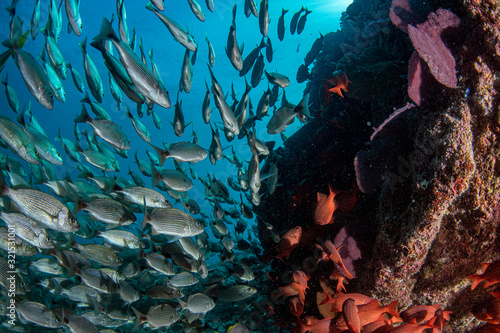 diving in colorful reef underwater in mexico cortez sea cabo pulmo Wallpaper Mural