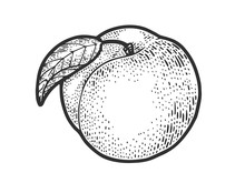 Peach Fruit Sketch Engraving Vector Illustration. T-shirt Apparel Print Design. Scratch Board Imitation. Black And White Hand Drawn Image.