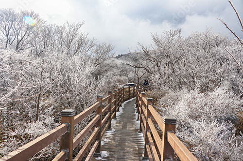 Fotografía 제주도 한라산 1100고지 겨울 설경 눈꽃