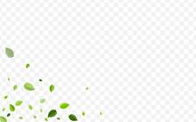 Lime Leaf Vector Backdrop. For...
