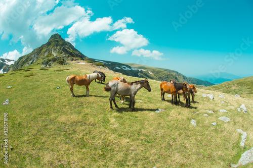 konie-w-gorach