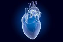 Human Heart, X-ray Hologram. 3...