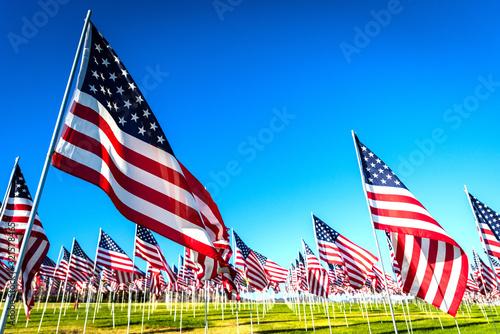 Fototapeta A large group of American flags. Veterans or Memorial day display obraz