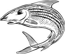 Bonefish Jumping Cartoon Vecto...
