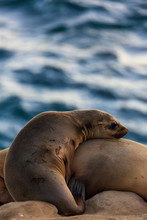 Pair Of Two Cuddling Sea Lions (mother And Baby Child) On The Beach By The Water Of La Jolla Cove, San Diego, California