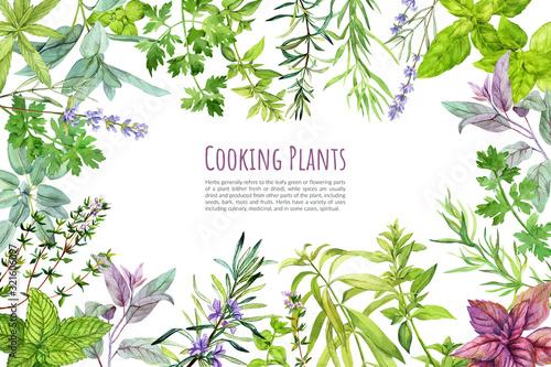 Carta da parati Culinary herbs and plants, frame, hand drawn watercolor