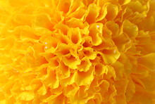 Yellow Concentric Flower Cente...
