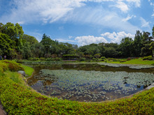 Pond At Imperial Palace East G...