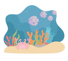 Crab Fishes Life Sand Coral Re...