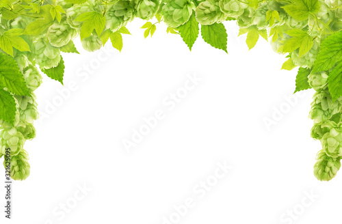 Fotografía Green hop cone, leaves and stem as a frame at the top isolated on white background