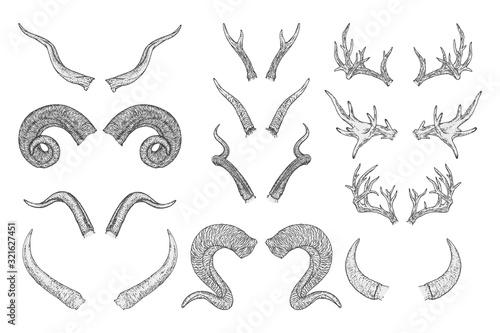 Fotografia, Obraz Vector set of hand drawn animals horns on white background