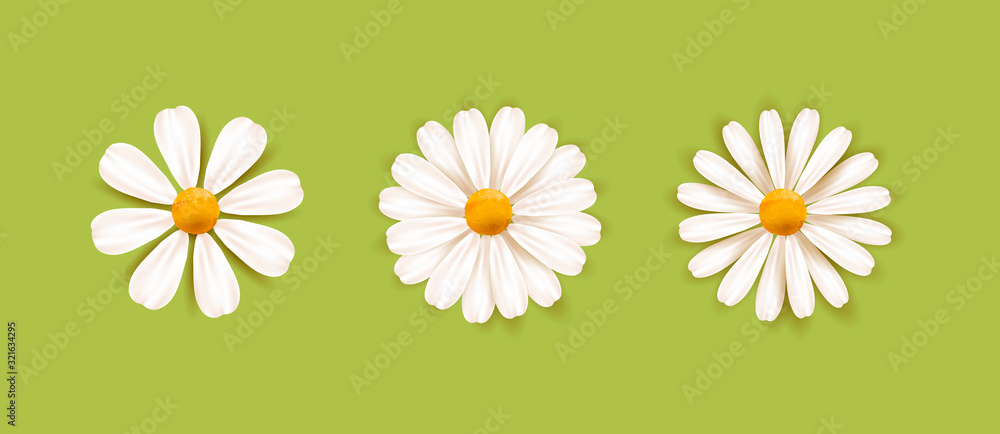 Fototapeta Set of White daisy chamomile illustration. Cute realistic flower plant icon collection. Different sorts of flower petal blossom