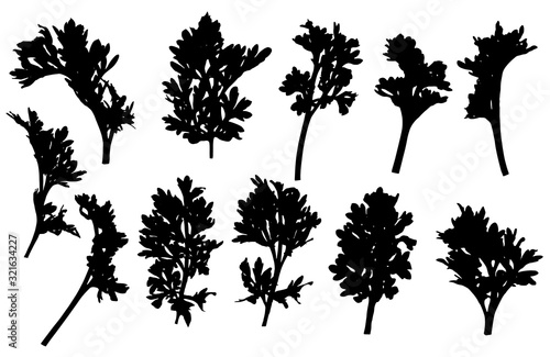 Photo Set of branches of wormwood, silhouette. Vector illustration