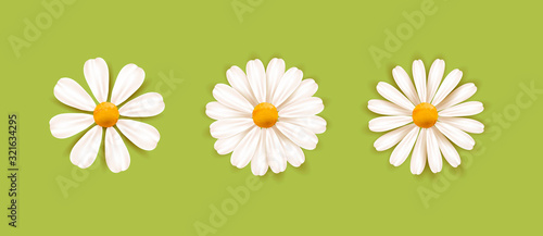 Photo Set of White daisy chamomile illustration