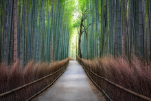 Bamboo Forest In Arashiyama, J...