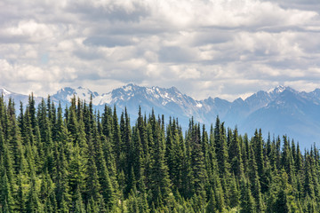 View of coniferous trees on a slope and mountains in Olympic National Park, Olympic Peninsula, Washington State US