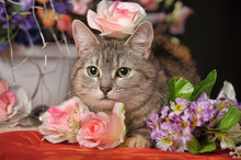 Gray Cat With A Rose
