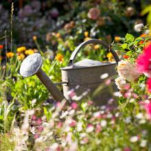 Arrosoir Dans Un Jardin Potage...
