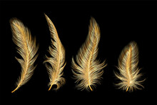 Set Of Gold  Feather. Vector Illustration.
