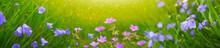 Wild Flowers Meadow In Sunset Light. Flowers Background.