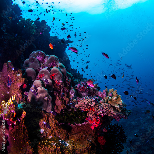 Scuba diving to see tropical fish on the reef