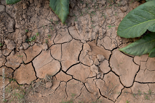 Fotomural Drought on the surface of tobacco field, Nan, Thailand.