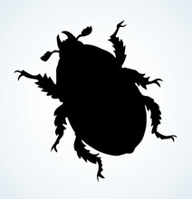Chafer. Vector Drawing Of A Bi...
