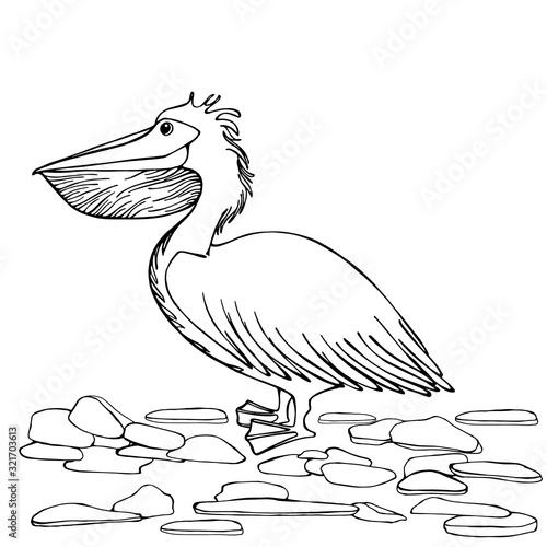 A Curly White Pelican A Large Bird With Small Details Isolated Illustration Side View Wildlife Bird In A Standing Position With Paws Hand Drawing Coloring Book For Children And Adults Buy