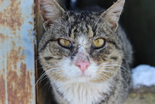 Unforgettable Portrait Of Cat ...