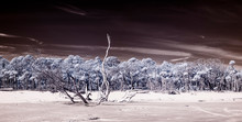 False Color Infrared Photograp...
