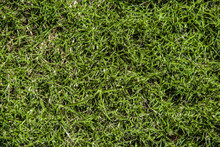 Close Up Texture Shot Of Green...