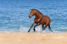Stallion Springs On The Sea Be...