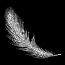 Feather Isolated On Black.Vect...