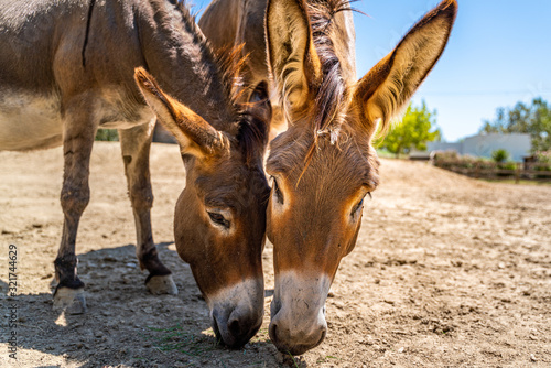 Two donkeys have in the summer sky Fototapeta