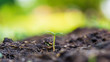 one small sprout growing in soil and green blur background